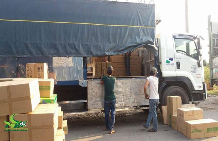 Dịch vụ hỗ trợ bốc xếp hàng hóa của Mai tâm Phát